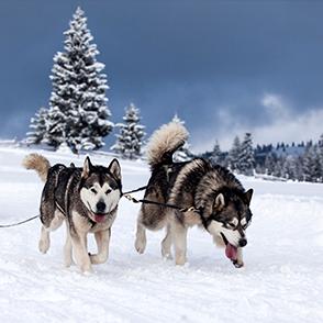 Events 2021 – från hundspann i Åre till middag på Operakällaren
